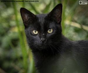 Puzle Černá kočičí tvář