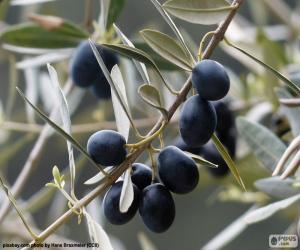 Puzle Černé olivy větev