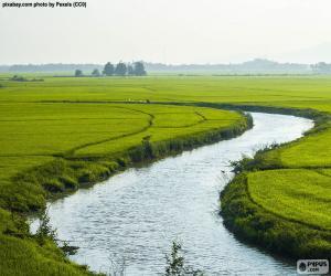 Puzle Řeka mezi rýžovými poli