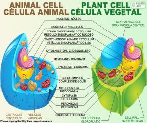 Puzle Živočišná a rostlinné buňka