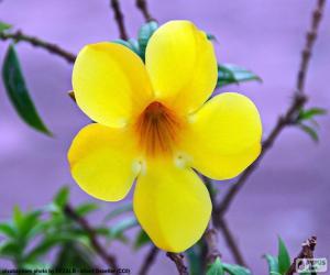 Puzle Žlutý květ z pěti lístků