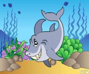 Puzle Žralok