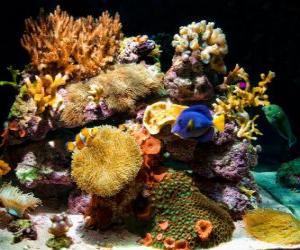 Puzle Akvárium