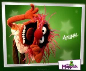 Puzle Animal, šílené bubeník z Muppet Show je primitivní člověk
