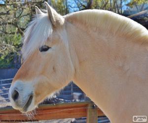 Puzle Béžové koňské hlavy