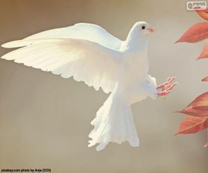 Puzle Bílá holubice