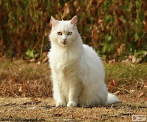 Puzle Bílá kočka sedící