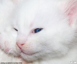 Puzle Bílá kočka tvář
