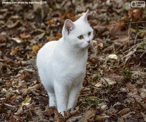 Puzle Bílé kotě