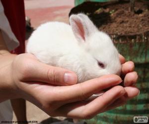 Puzle Bílý králíček, ruce