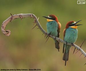 Puzle Bee-eater si Böhm