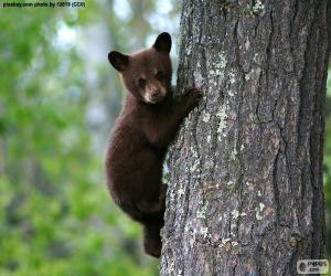 Puzle Brown bear cub vyšplhá na strom