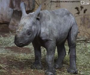 Puzle Chov černých nosorožců