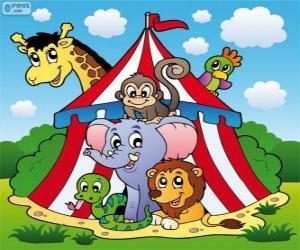 Puzle Cirkusu zvířata