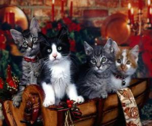 Puzle Cute koťata na Štědrý den