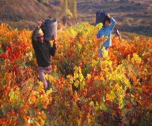 Puzle Dělníci v sklizeň