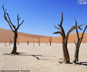 Puzle Deadvlei, Namibie