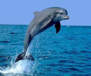 Puzle Delfín