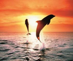 Puzle Delfíni při západu slunce