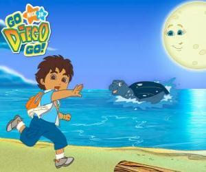 Puzle Diego na pláži a mořská želva ve vodě