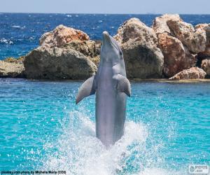 Puzle Dolphin dělá trik