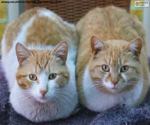 Puzle Dvě kočky