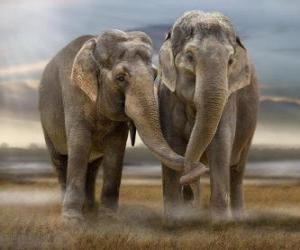 Puzle Dvě velké sloni s propletené kmeny