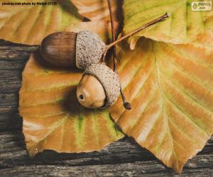 Puzle Dva žaludy a podzimní listí