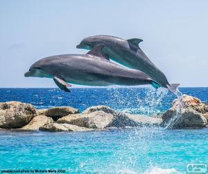 Puzle Dva delfíni na lyžích