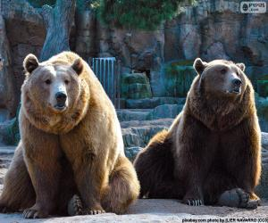 Puzle Dva hnědí medvědi