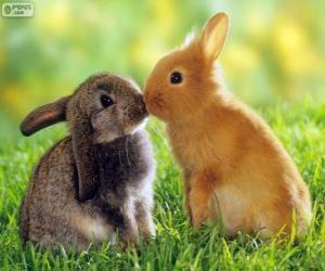 Puzle Dva krásné králíky tváří v tvář