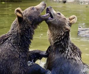 Puzle Dva medvědi ve vodě