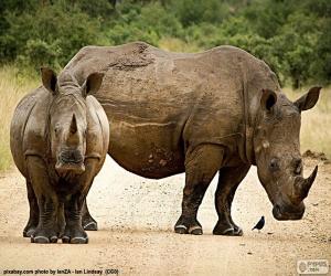 Puzle Dva nosorožci