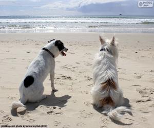 Puzle Dva psi na pláži