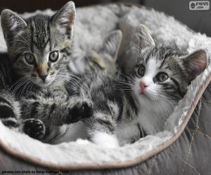 Puzle Dva roztomilý koťátka