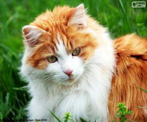 Puzle Elegantní kočka
