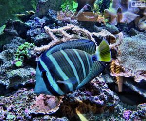 Puzle Exotických ryb