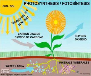 Puzle Fotosyntéza