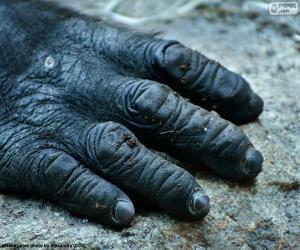 Puzle Gorilí ruka