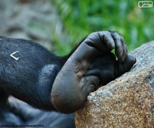 Puzle Gorila noha
