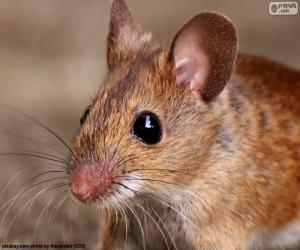 Puzle Hlava myš