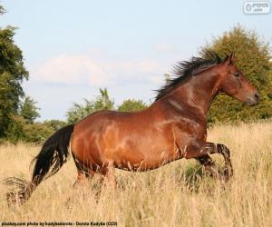 Puzle Hnědý kůň běží