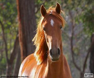 Puzle Hnědý kůň z přední strany