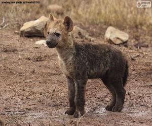 Puzle Hyena štěně
