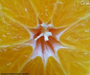 Puzle Interiér mandarinky
