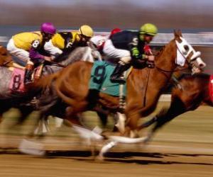 Puzle Jízda na koni - Koňské dostihy na dostihové závodiště