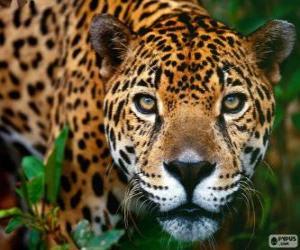 Puzle Jaguar hlava