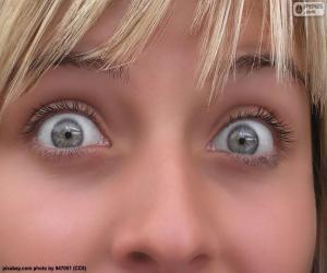 Puzle Jasné oči tvář