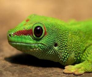 Puzle Ještěrka zelená