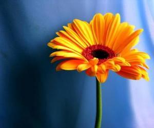 Puzle Jednoduchý květ, že dárek pro svou matku